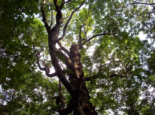 gargoyle tree