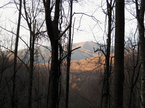 View of Flint Mtn. from trail through Sugarloaf Branch