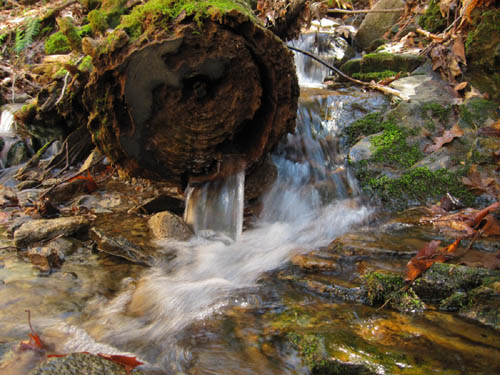 Water Log in Upper Devils Fork Valley